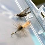 Bug_FlyBug
