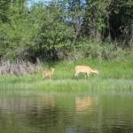 DeerRiverside
